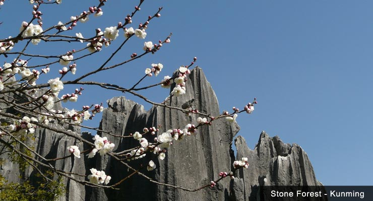 a-white-blossom-tree-shilin-stone-forest
